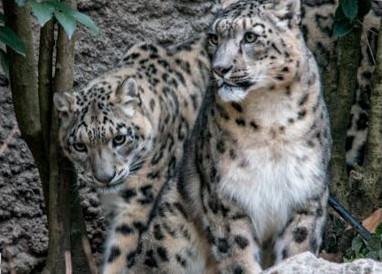 Biglietti Parco Natura Viva - Parco faunistico e safari